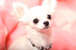 胸がきゅんきゅんする犬画像