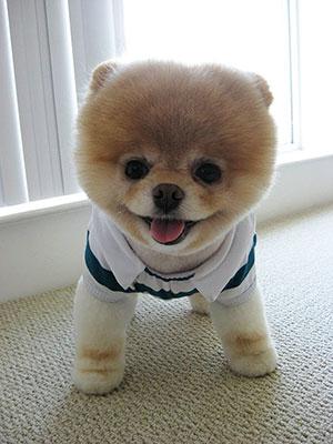 胸がきゅんきゅんする 犬 画像