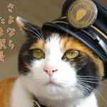 先日、亡くなった三毛猫のたま駅長の人気の背景と、見た人の感想は?
